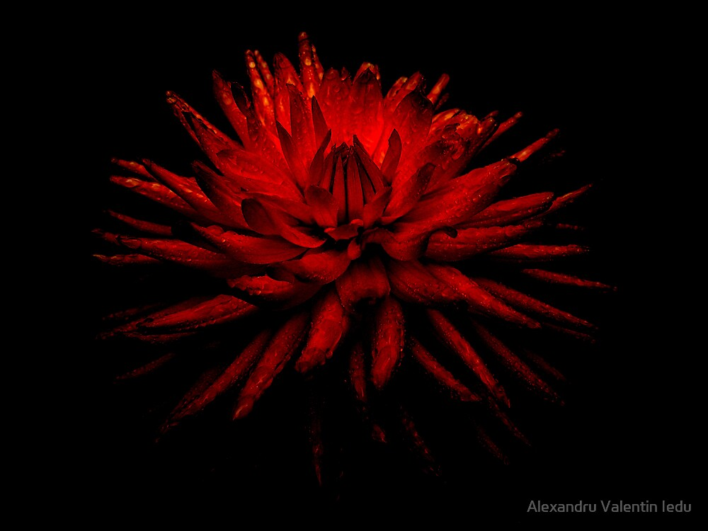 Soul Flower - Passion In Love by Alexandru Valentin Iedu
