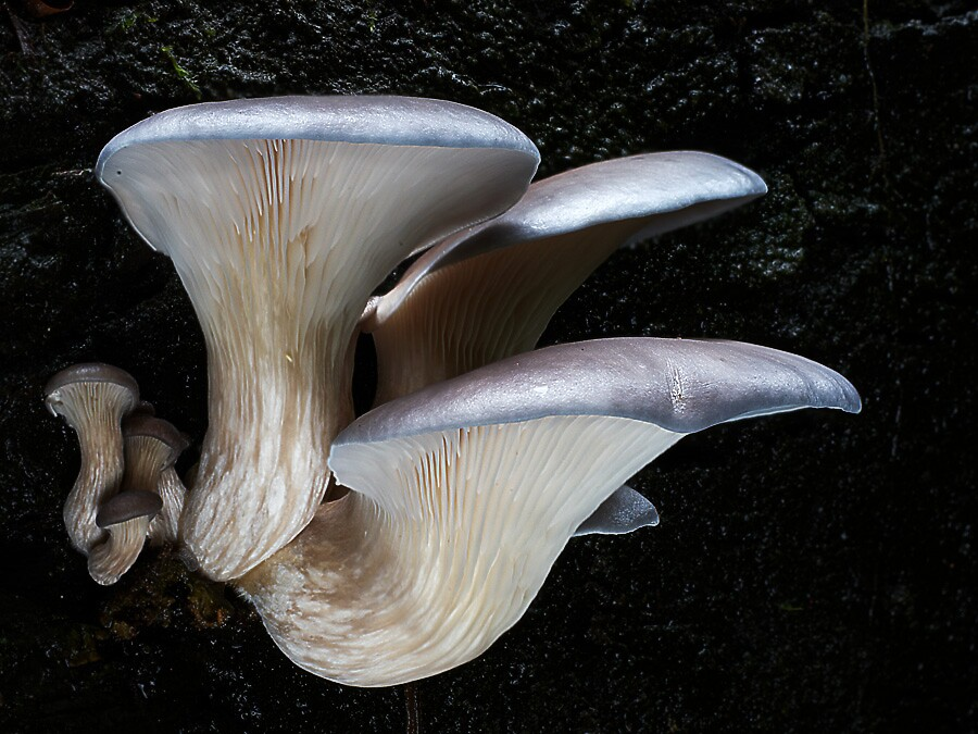 Oysters by Steve Axford