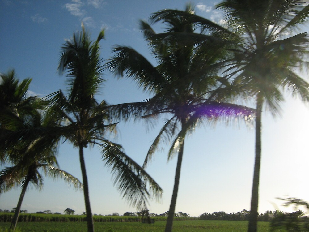 palm tree row by Jessica  Taylor-Cassan