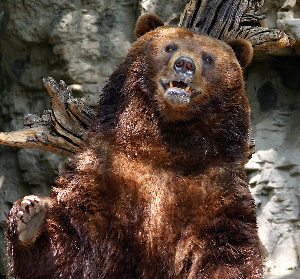Grizzly Bear by Jim Caldwell