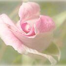 Erste Rose des Frühlings von Celeste Mookherjee