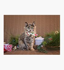Christmas Tortie Photographic Print