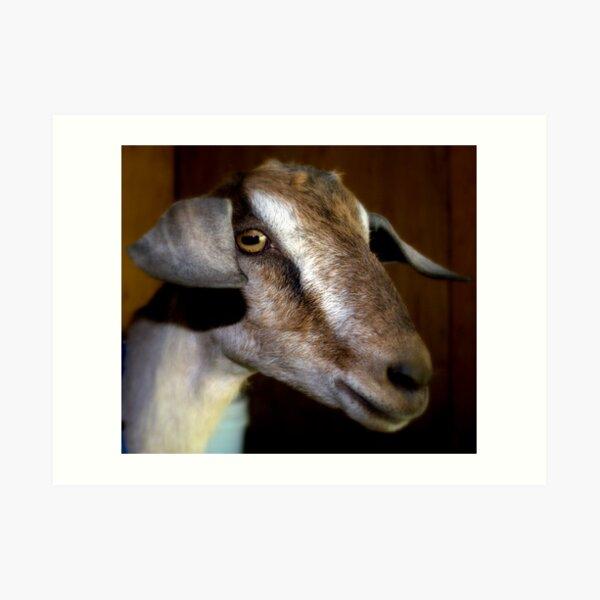 Sugar The Dairy Goat Art Print