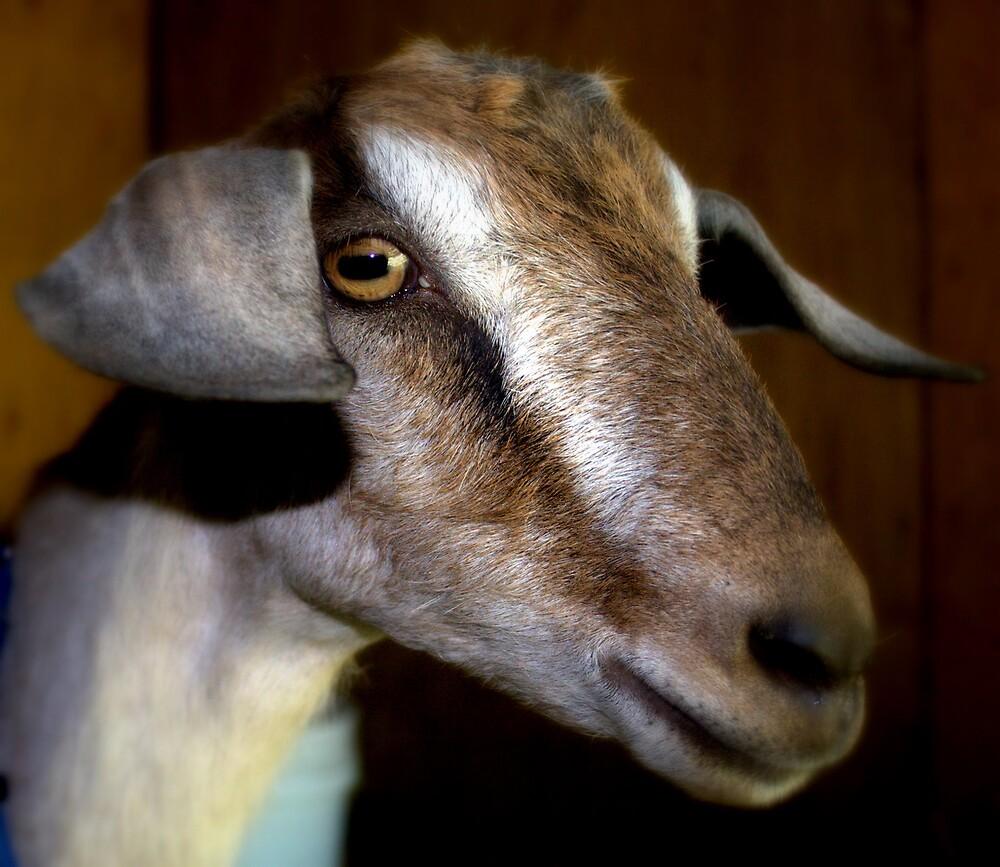 Sugar The Dairy Goat by Sheri Ann Richerson