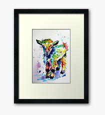 Cute baby goat Framed Print