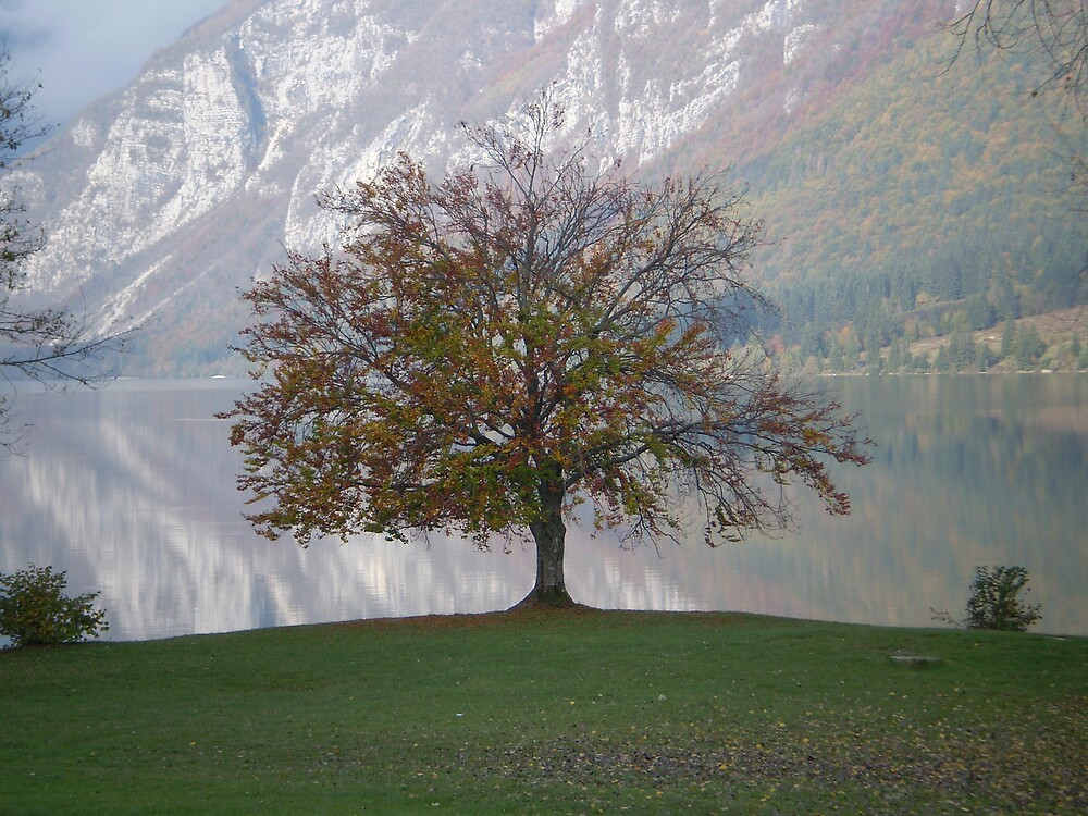 Autumn, Lake Bohinj Slovenia by oscars