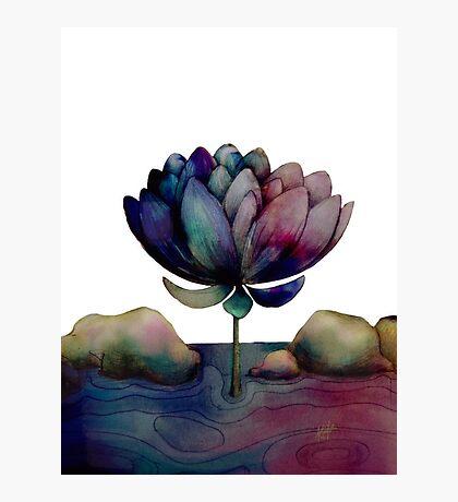 rainbow lotus flower Photographic Print