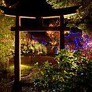 Japanese Garden Christmas Lights, Mayne Island, BC by toby snelgrove  IPA