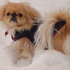 I am a snow dog by loiteke