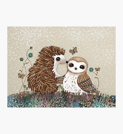Owl and Hedgehog Photographic Print