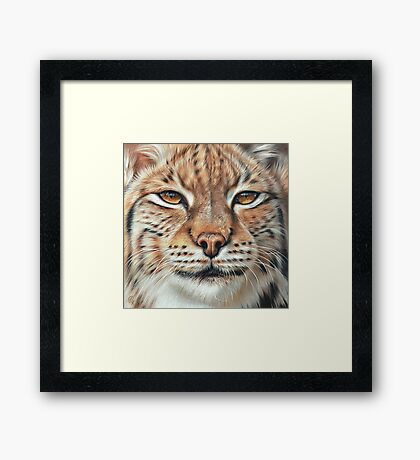 Faces of the wild - Lynx Framed Print
