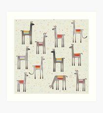Lamas auf der Wiese Kunstdruck