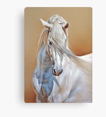 Andalusian stallion Canvas Print