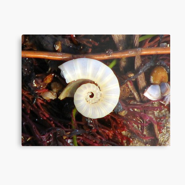 Empty Shell Syndrome Metal Print