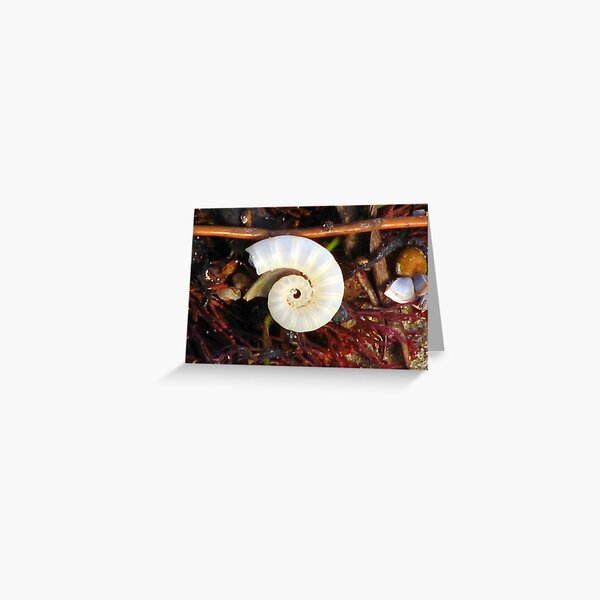 Empty Shell Syndrome Greeting Card