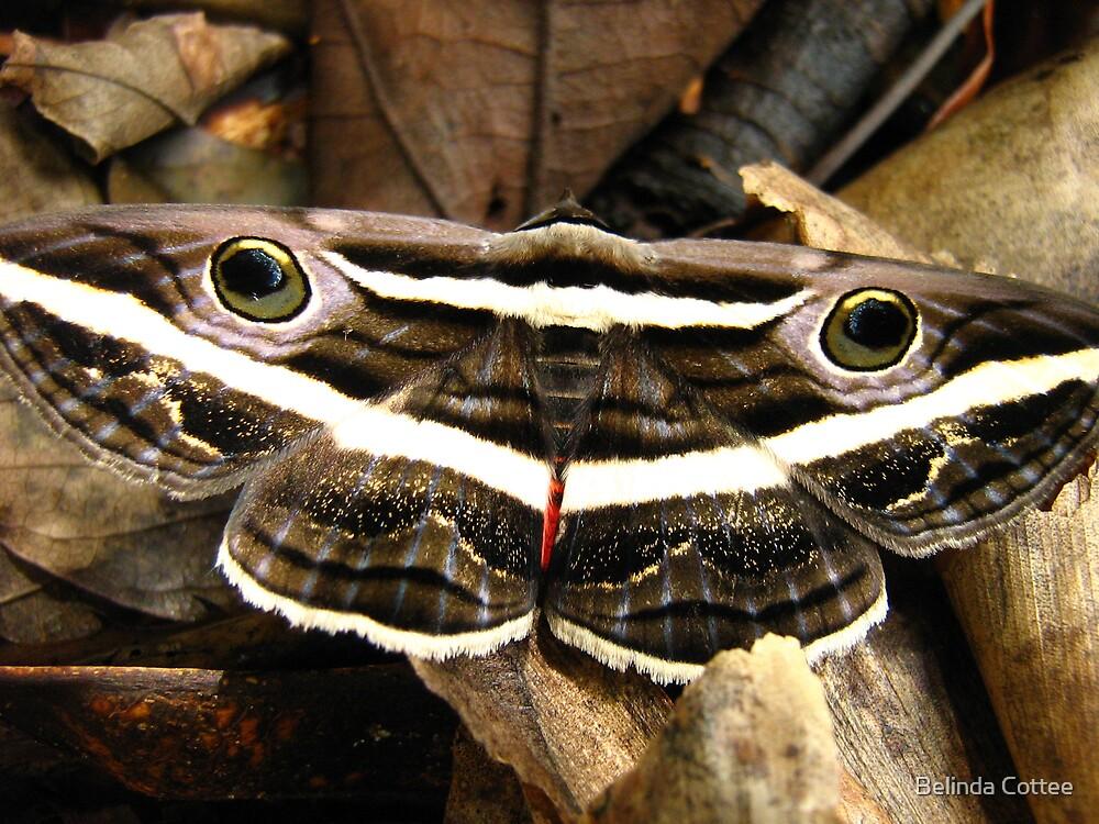 moth by Belinda Cottee