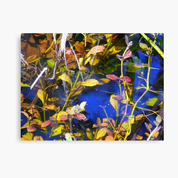 Water Garden Reflects. Canvas Print