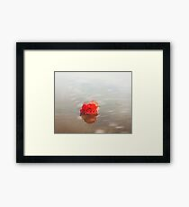 Red rose floral photography Framed Print