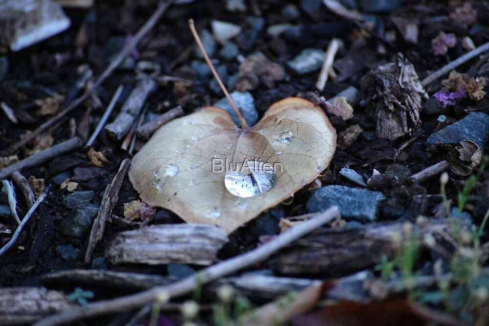 Heart Leaf by PixelBoxPhoto