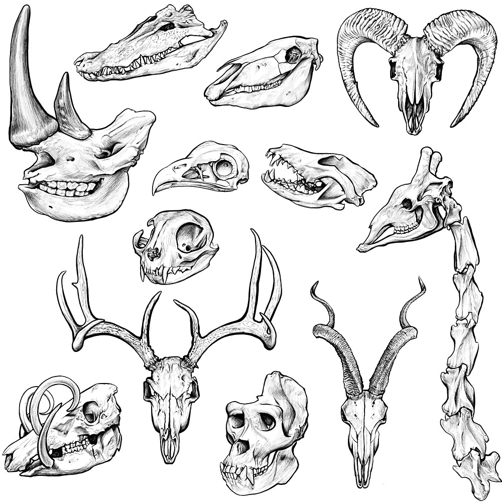 animal skull ink sketch by kylie yang redbubble