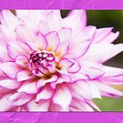 Beautiful Dahlia by daphsam
