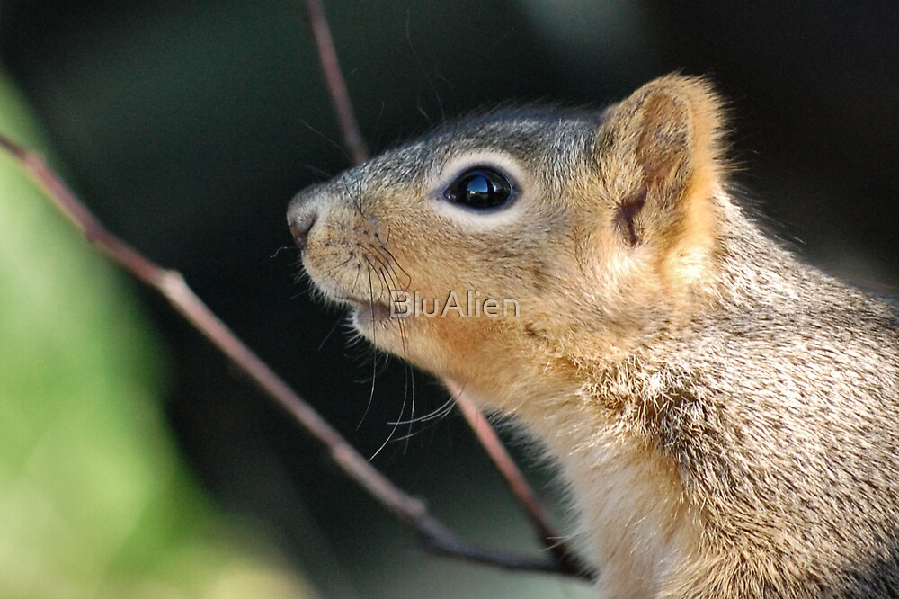 Have A Nutty Day by PixelBoxPhoto