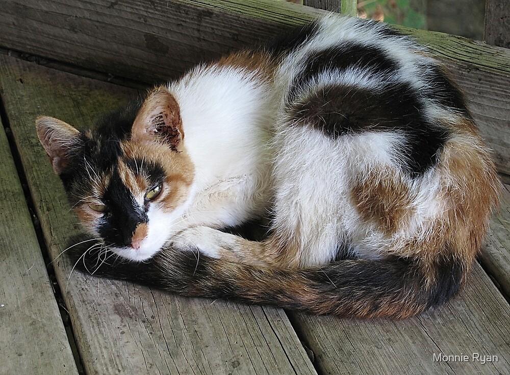 Happy Kitty, Sleepy Kitty by Monnie Ryan
