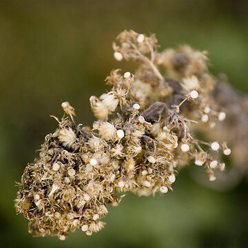 Macro flower by Creando