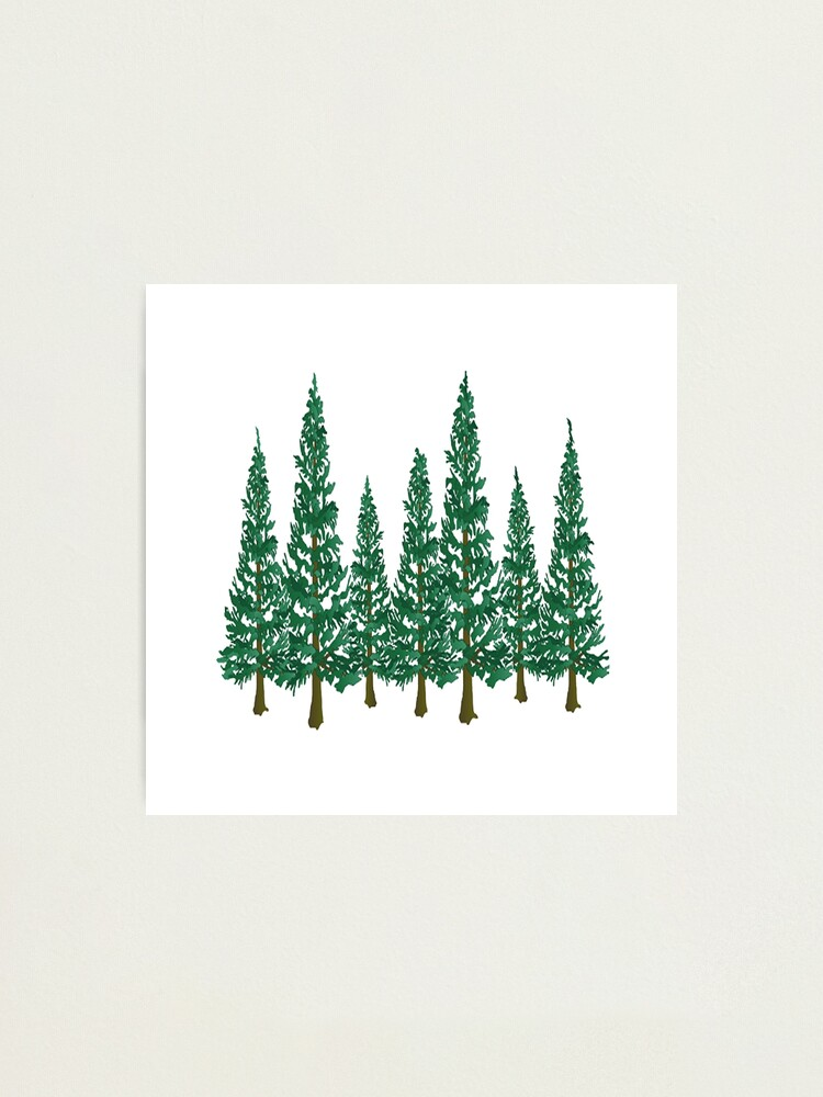 Alternate view of Into the Pines Photographic Print
