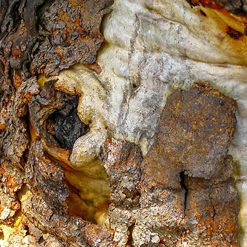 Rough Bark Abstract by blossom