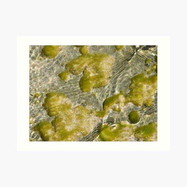 Aqua Green Art Print