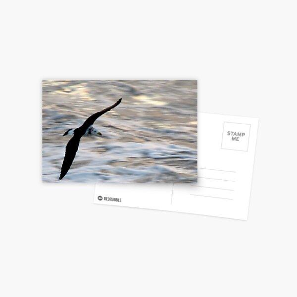 I'm Late, I'm Late . . . Postcard