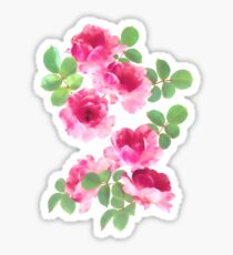 Raspberry Pink Painted Roses on White Sticker