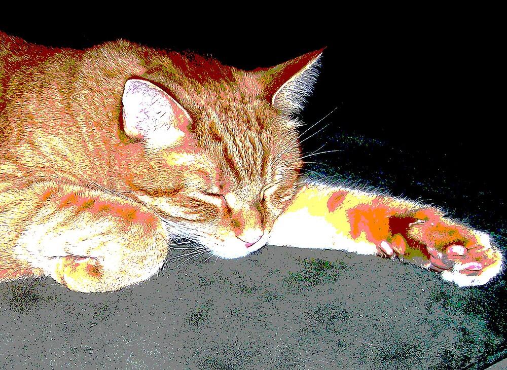 kitty pretty by deegarra