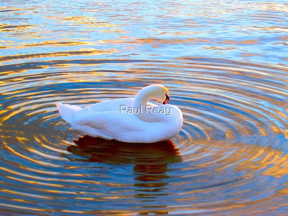 White Swan by Paul Reay