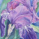 Tuscan Iris by Carolyn Bishop