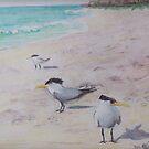 Sea Birds by Carolyn Bishop