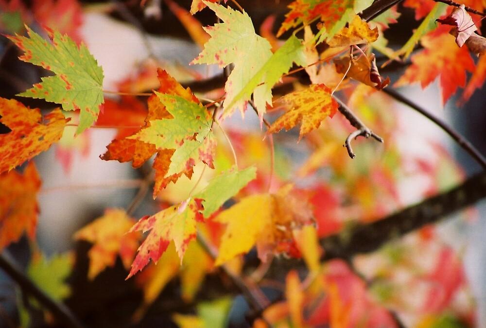 Nature's Color by Rebecca Rohland