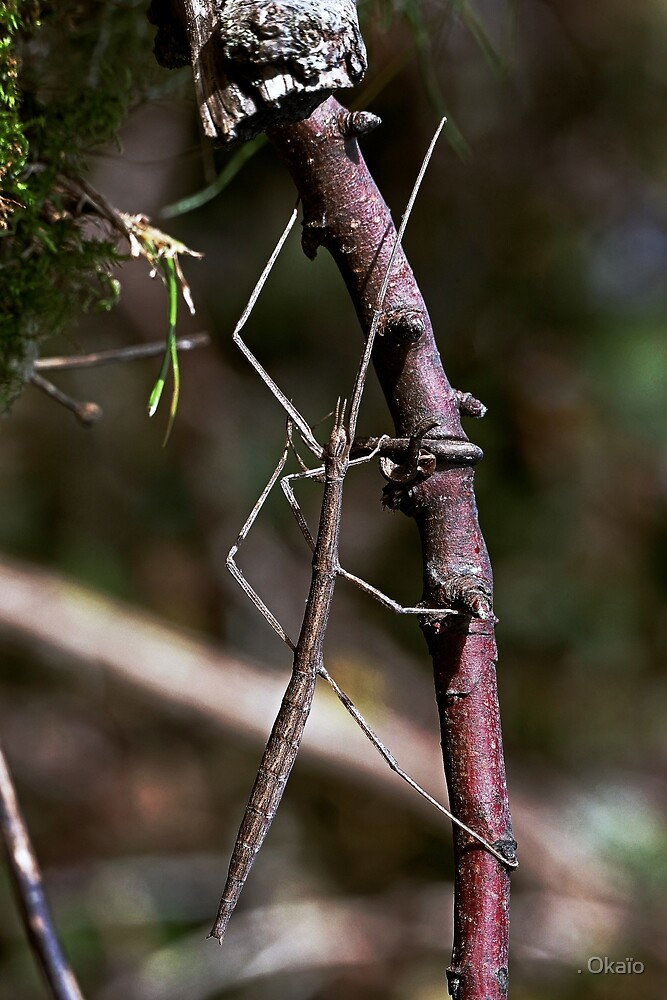 Stick insect Phasme story 15 VERSION 2   (C)(h) by Olao-Olavia / Okaio Créations fz 1000 by . Okaïo