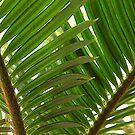 Jungle by Andi Hardwick