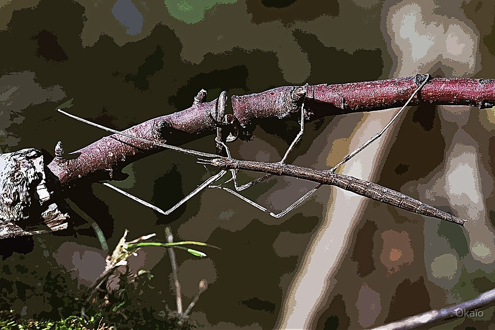 Stick insect Phasme story 14 paint   (c)(t) by Olao-Olavia / Okaio Créations fz 1000 by . Okaïo