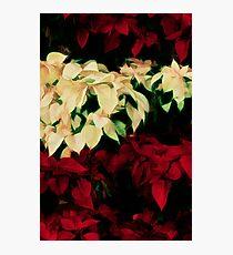 Yuletide Bouquet Photographic Print