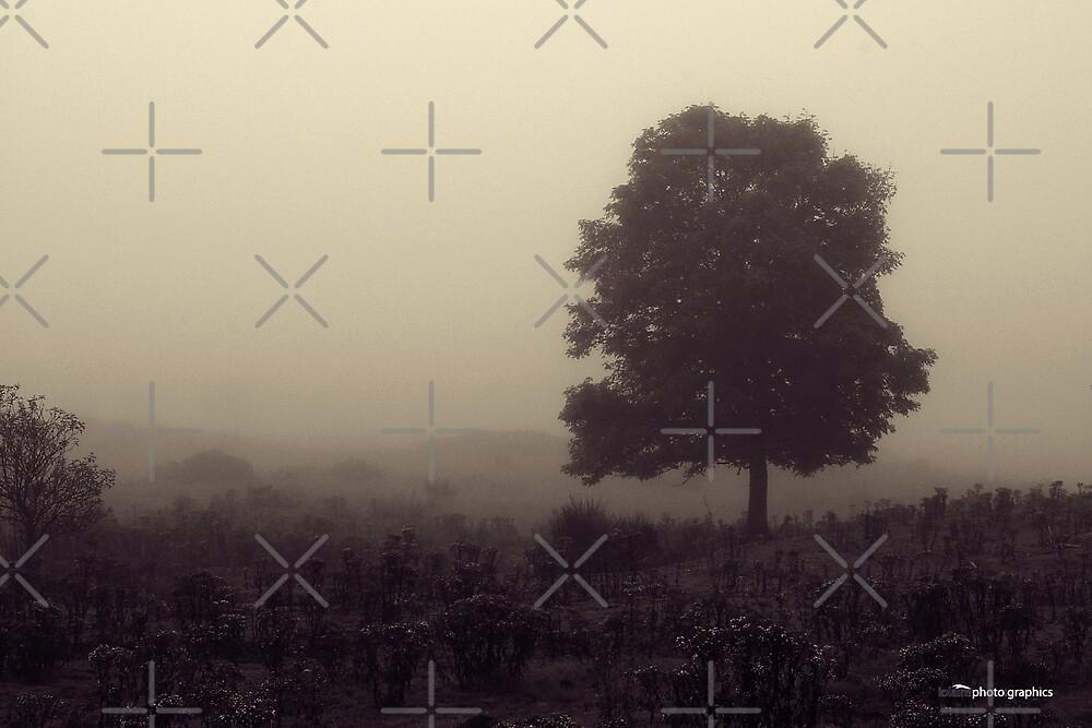 Lone Tree by Tez Watson