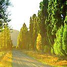 Wanaka Morning Light by kevin smith  skystudiohawaii