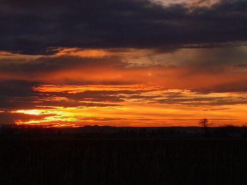 Montana Sunrise by Megan Newman