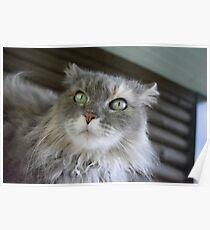 My DUMB cat Poster