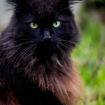 Black Cat by risingstar