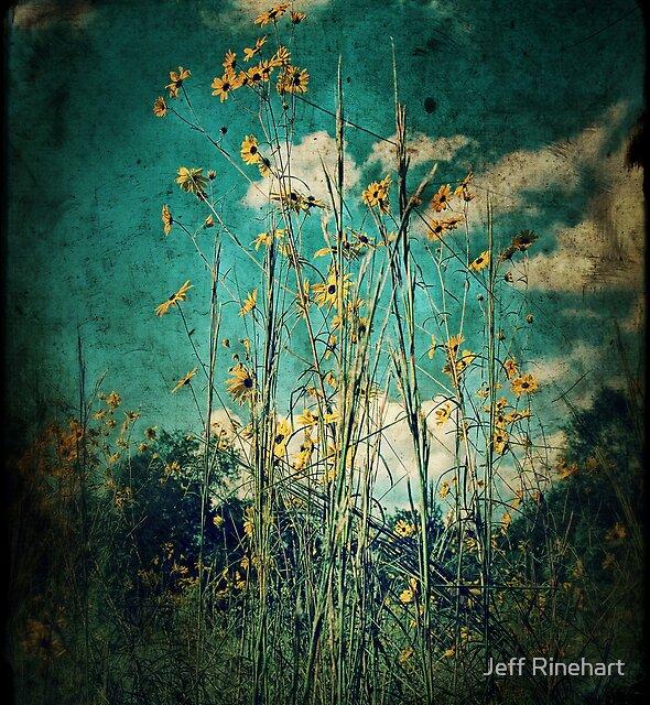 Peace of Mind by Jeff Rinehart