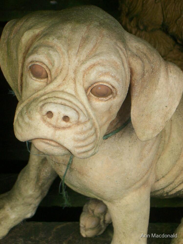stone dog by Ann Macdonald
