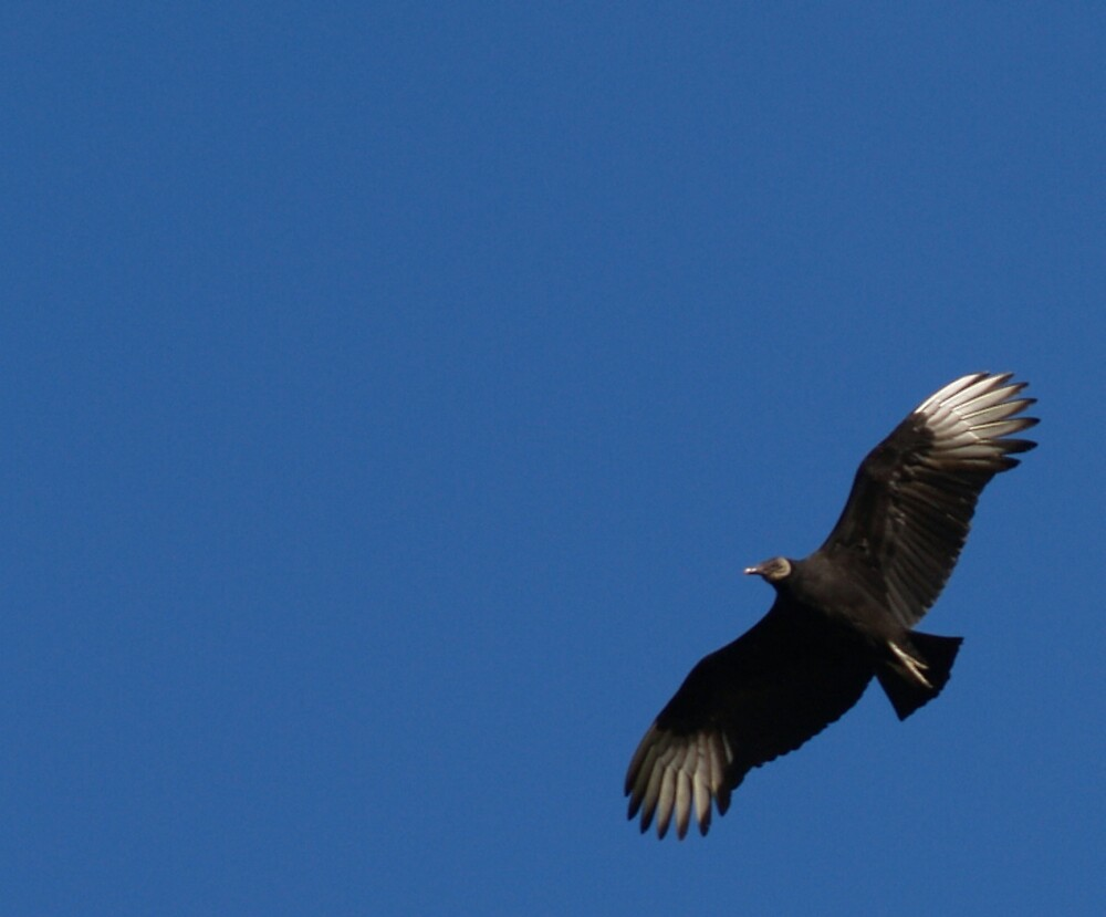 Bird In Flight by Sam  Athey